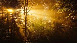 Sun-Rays Giving Life