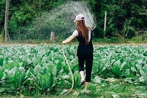 organic agricuture